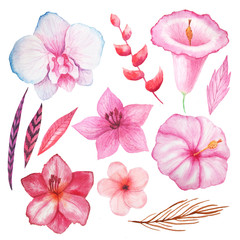 Watercolor tropical flowers, leaves and plants
