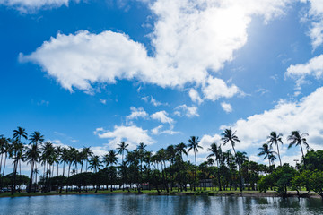 ヤシの木と空,水面の反射,ハワイ