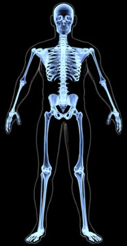 man's body under X-rays. 3D illustration.
