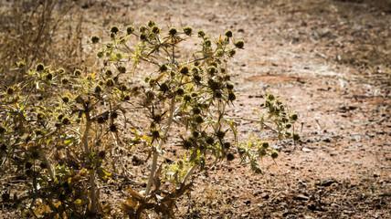 Cactus a pleno Sol
