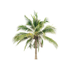 Coconut palm tree isolated on white. This has clipping path.