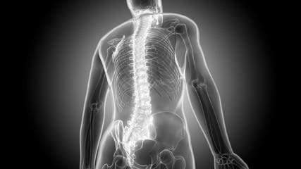 Human Body Bone Pains (Spinal Cord)