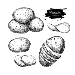 Potato drawing set. Vector Isolated potatoes heap, sliced pieces