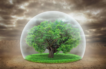 Concept of life. The Tree of Life in the transparent protection
