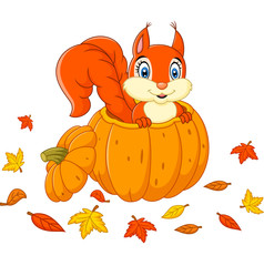 Cute squirrel in a pumpkin