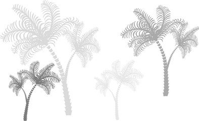 Palms of gray colors and several size