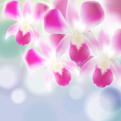 Beautiful Orchids on blurred blue background. Vector