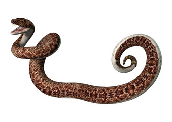 3D Rendering Rattlesnake on White
