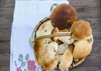 Mushroom boletus. Cep boletus. Porcino, bolete, boletus.Beautiful, freshly picked mushrooms laying on bright tablecloths.