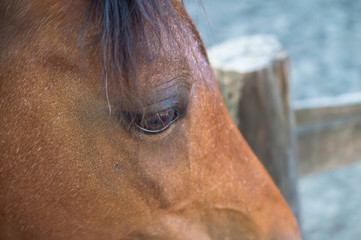 Close up of a brown horse's eye
