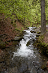 Carpathian mountains stream in a forest