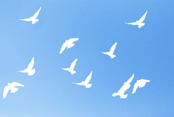 silhouette dove on a background of blue sky