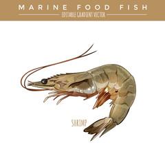 Shrimp. Marine Food Fish