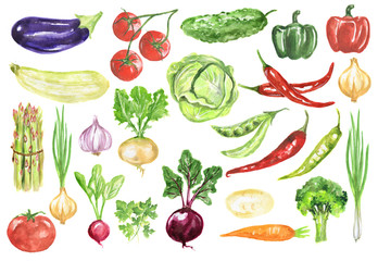 Watercolor vegetables set. Fresh and healthy vegetables on white background. Great source of vitamin.