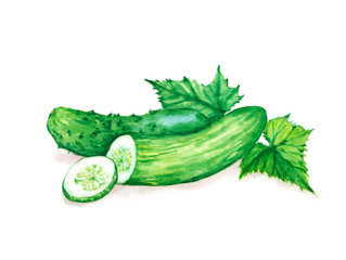 Hand drawn watercolor illustration of fresh green cucumbers with leaves. Isolated on the white background. Vegetarian food product