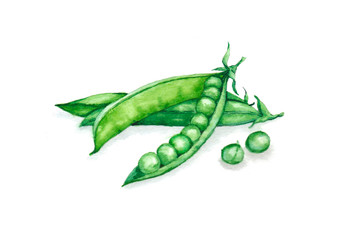 Hand drawn watercolor illustration of fresh green peas in the husk. Isolated on the white background. Vegetarian food product