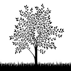 Silhouette of tree and grass background vector