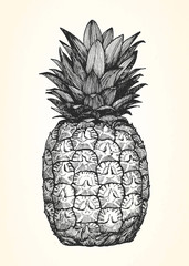 Hand-drawn illustration of Pineapple. Vector
