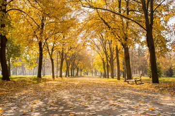Park covered in yellow fallen leaves