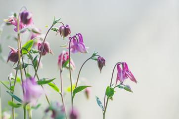 kleine bloemetjes in bloei