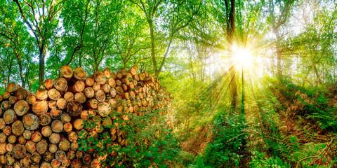 Wald mit einem Stapel abgesägter Baumstämme bei strahlendem Sonnenschein