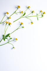 Vine of white grass flowers on  white background.