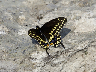 Beautiful isolated image with a butterfly on the rock