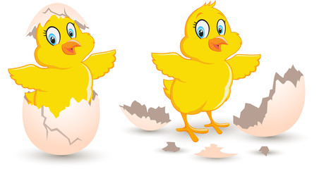 Chick Coming Out From Broken Egg. Baby cute chick hatched newborn in the broken eggshell vector illustration on white background