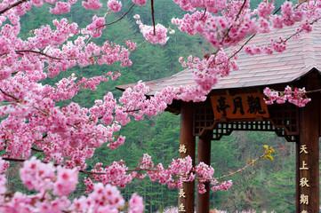 Taiwan Landscape