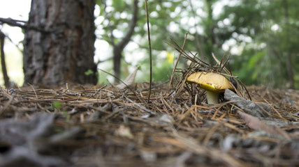 Грибок и дерево