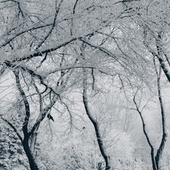 Canvas Prints Textures branch plants in the snow