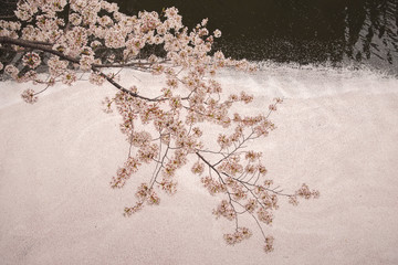 Overhead view of cherry blossoms on branch over canal during winter