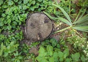 Tree trunk cross section on street