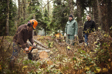 Lumberjack sawing tree trunk with motor saw in forest