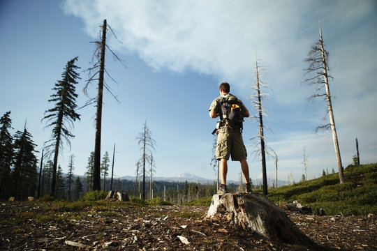 Rear view of male hiker standing on tree stump in forest