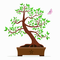 Vector illustration of bonsai tree on a white background