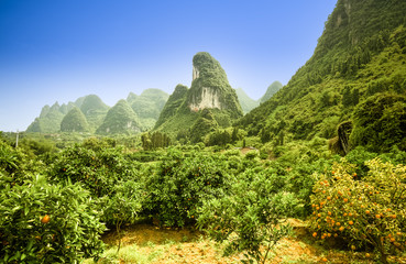 karst landscape and orange threee in yangshuo