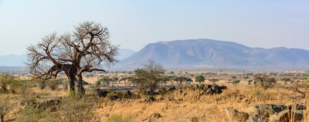 Printed roller blinds Baobab Landscape with Baobab (Adansonia digitata). Ruaha National Park. Tanzania
