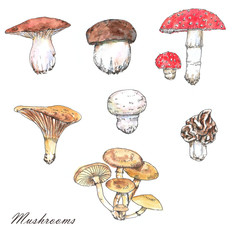 Watercolor and ink mushrooms illustrations. Hand drawn different wild forest mushrooms isolated on the white background