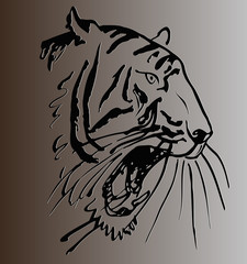 sketch of a tattoo  tiger head with open mouth against gray background