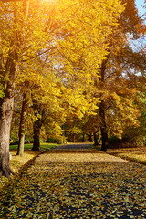 Beautiful autumn park.  Fall trees and leaves. Autumn Landscape.