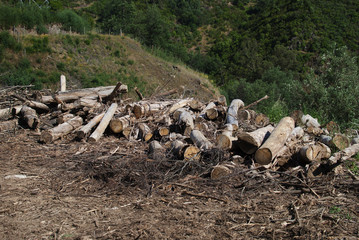 Deforestation, various tress cut of, forest destruction and environmental issues theme.