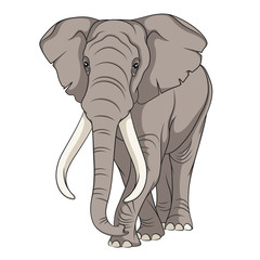 Color vector image of an elephant. Isolated object.