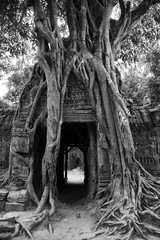 Spung tree roots over the prasat gate of the Ta Som temple ruins, Angkor, Cambodia. Black and white picture