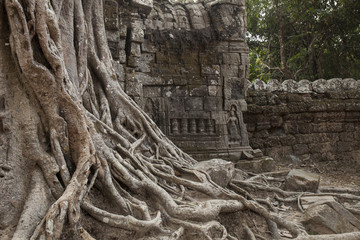 Spung tree roots over the Ta Som temple ruins, Angkor, Cambodia