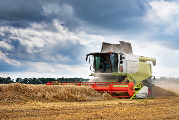 Wall Mural - Working Harvesting Combine in the Field of Wheat.