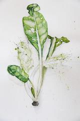 Watercolor dmangold plant