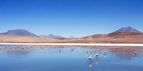 pink flamingos in Bolivia, nature and wildlife, beautiful landscape with mountain lake and birds