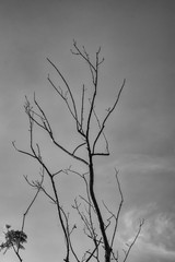 abstract black & white dry tree background