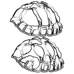 sketch shape turtle sea icon cartoon design abstract illustration animal
